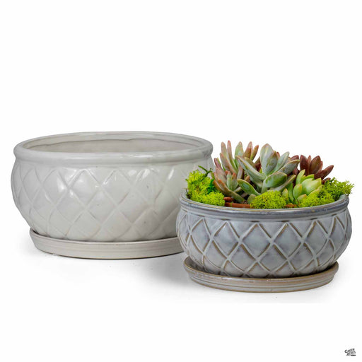 Camilia Bowl Planter group
