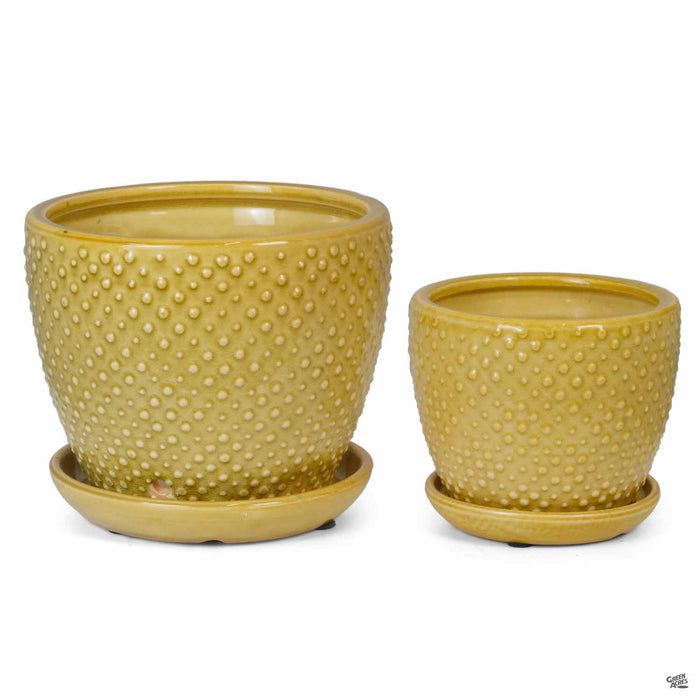 Classic Dot Planter in two sizes
