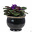 African Violet Self-Watering Pot with Plant