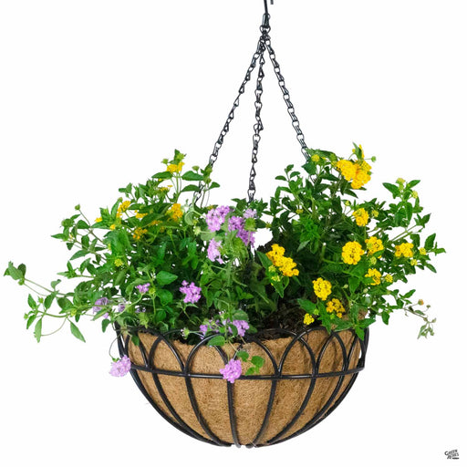 Greenbrier Hanging Basket