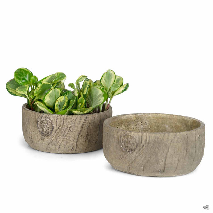 Pinewood Low Planter 9 inch