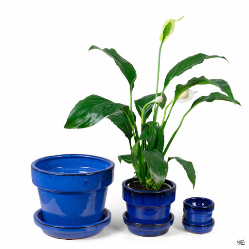 Standard Pot with Attached Saucer in Blue All Sizes