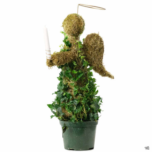Ivy Topiary Angel