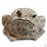 Toad Hollow Toad Figurine Jumbo in Natural