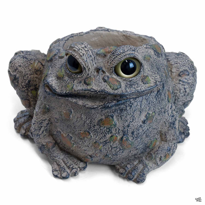 Toad Hollow Toad Planter 4 inch