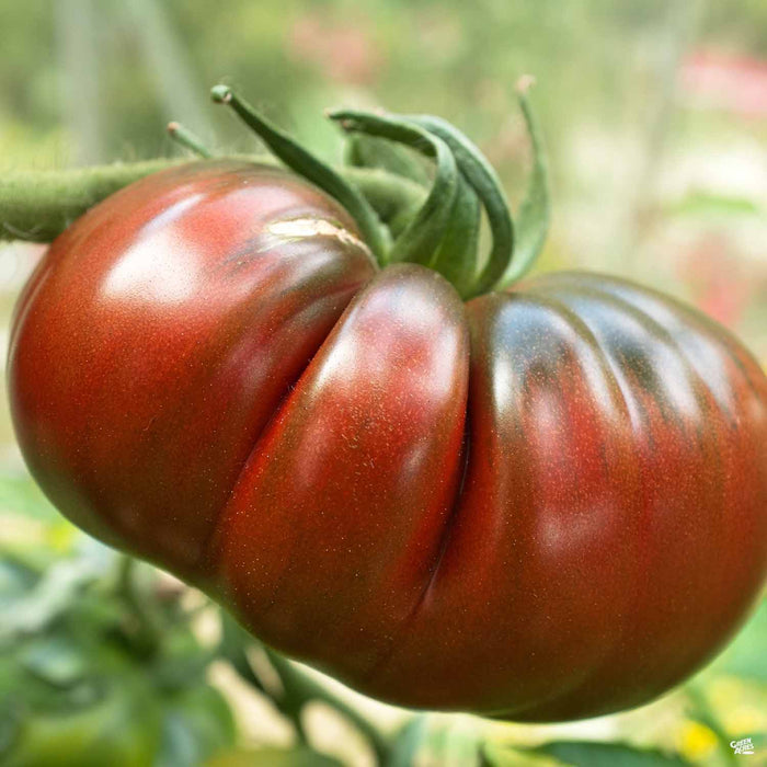 'Cherokee Purple' Tomato