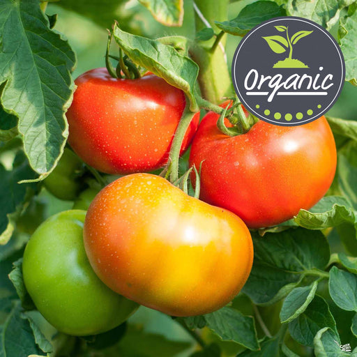 'Mortgage Lifter' Tomato Organic