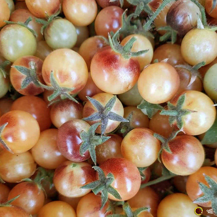 Tomato 'Amethyst Cherry Cream'