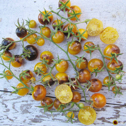 'Gold Berries' Wild Boar Tomatoes