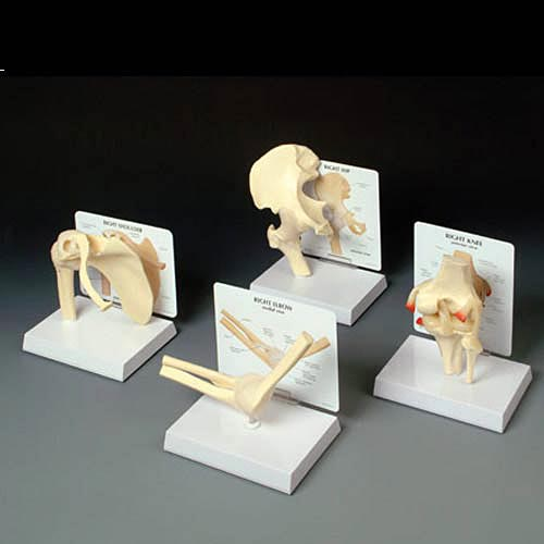 Basic Joint Model Set