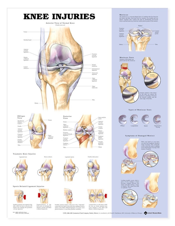 Knee Injuries Chart