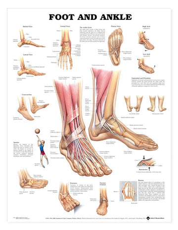 Foot & Ankle Chart