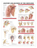 Anatomy & Injuries of the Shoulder Chart