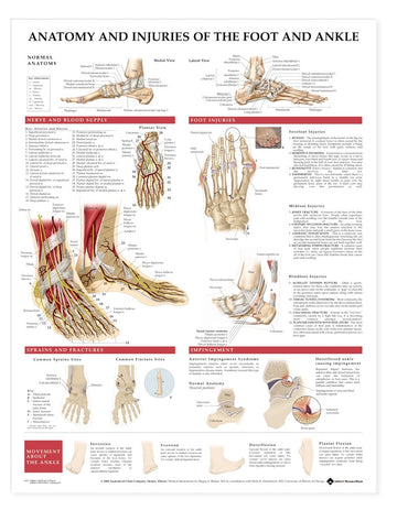 Anatomy & Injuries of the Foot and Ankle Chart