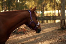 Load image into Gallery viewer, Leather Noseband Halter - Hearthorse