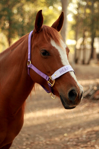 IN STOCK Leather Noseband Halter - Hearthorse