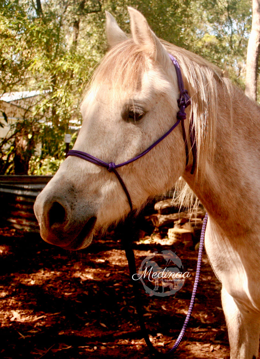 IN STOCK Rope Halter and 8ft Lead Rope - Purple - Arab/Small Cob