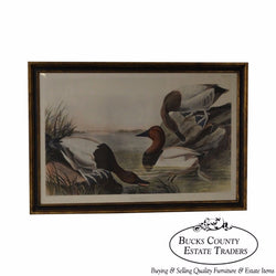 JJ Audubon Canvas Backed Duck Framed Engraving Print