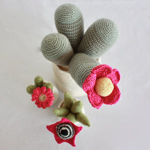 Flowering Crochet Cactus-Pink Daisy Flower