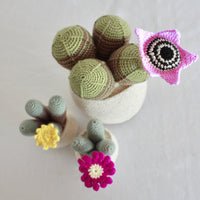 Flowering Crochet Cactus-Flat Yellow Flower with Stripped Cluster
