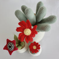 Flowering Crochet Cactus-Dark Pink Star Flower