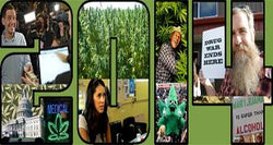 2014 in Review: A Historic Year for Marijuana Reform