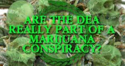 "Dangers of Marijuana Center of Conspiracy Per Former DEA ""Propagandist"""
