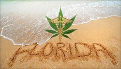 Hope for Medical Marijuana Remains Alive in Florida
