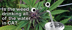 Is Illegal Marijuana Really Causing California's Drought?