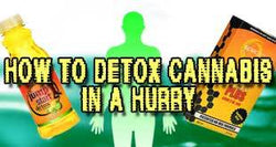 Marijuana Detox Drinks and Other Methods to Pass Your Drug Test
