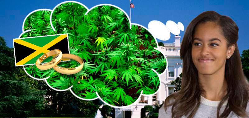 Marijuana Farmer Offers Obama A Pot Farm In Exchange For His Daughter
