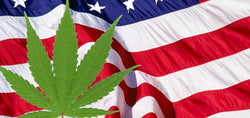 Newly Proposed Legislation Would Officially Legalize Marijuana in the U.S.