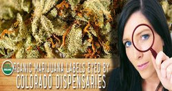 Organic Marijuana Labels Eyed By Colorado Dispensaries
