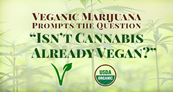 "Veganic Marijuana Prompts the Question ""Isn't Cannabis Already Vegan?"""