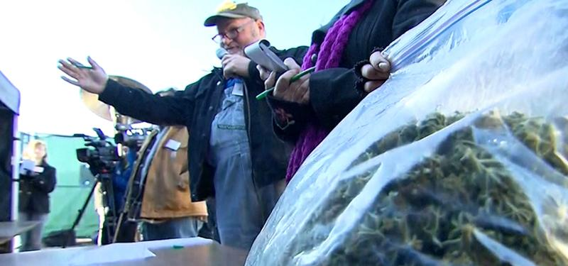 Washington State's Marijuana Auction Valued at $600,000