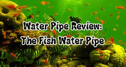 Water Pipe Review: There's Something Fishy About This Pipe