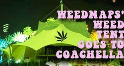 Weed Tent Sponsored by WeedMaps to Set Up Opposite Coachella