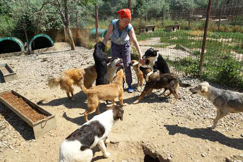 Bodenlang Animal rescue dogs