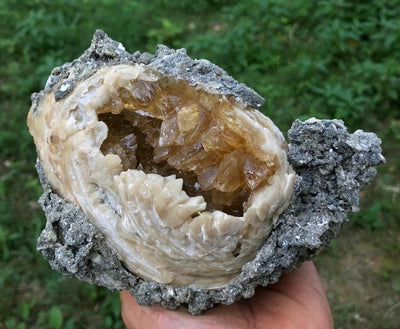 Golden Honey Calcite Crystals in Fossil Clam Shell Matrix