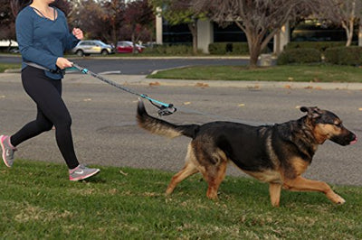 Friends Forever Bungee Hands Free Dog Leash for Running, Reflective & Adjustable Waist Belt for Dog Walking with Bonus Waste Bag Dispenser, One Size Fits Small Medium to Large Dogs, Grey/Blue