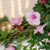 Artificial 35cm Pink Morning Glory and Mulberry Pink Rose Display in a 20cm Gloss White Square Planter