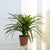 Artificial 2ft 1″ Yucca Plant Closer2Nature