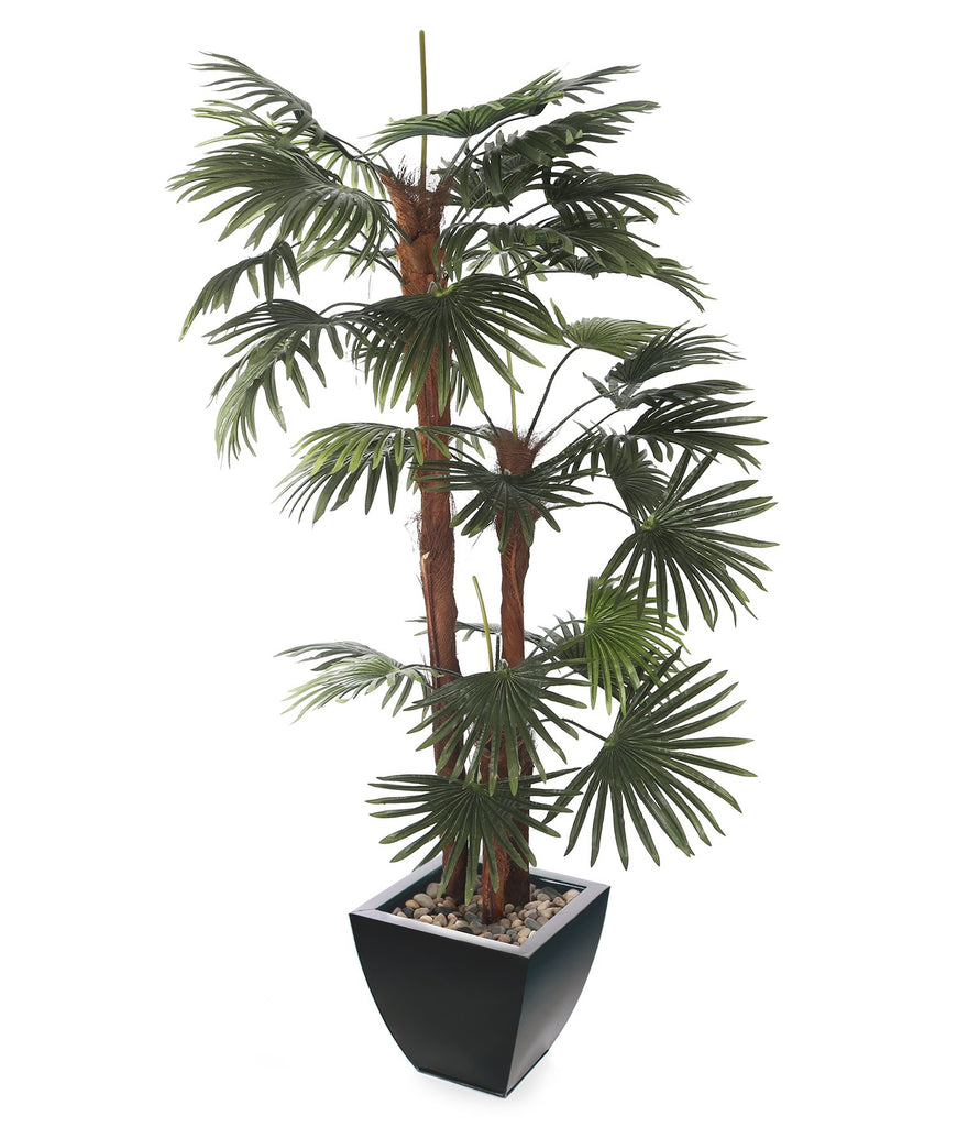 Arfiticial 6ft Finger Palm with 30cm Portofino Planter and Scottish River Stones Closer2Nature