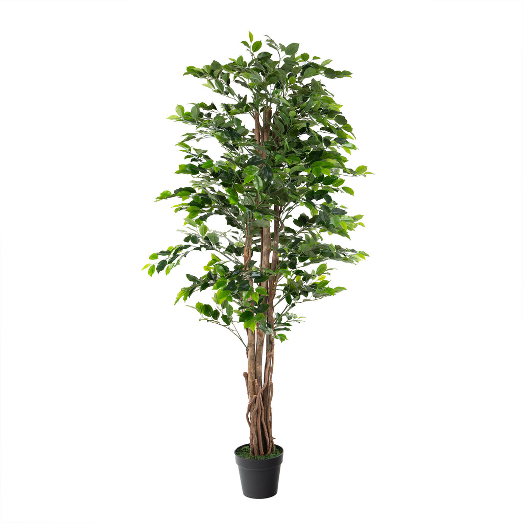 Artificial 6ft Weeping Fig Tree with Twisted Stem Closer2Nature
