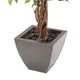 Artificial Weeping Fig Tree with Twisted Stem, 30cm Portofino Planter and Dark River Stones