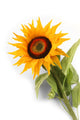 Artificial 88cm Single Stem Golden Yellow Sunflower - Closer2Nature