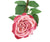 Artificial 92cm Single Stem Fully Open Dusky Pink Rose - Closer2Nature