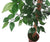 Artificial 6ft Weeping Fig Tree - Closer2Nature