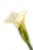 Artificial 94cm Single Stem Cream Calla Lily - Closer2Nature