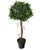 Artificial 3ft 5″ Danielle Weeping Fig Tree - Closer2Nature